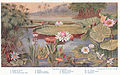 Aquatic Plants Between pages 126 and 127.jpg