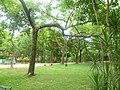 Arboles - panoramio (12).jpg