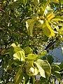Arbor Drive lemon.jpg