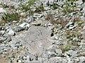 Ardilla Negra en el Cerro de la Silla.jpg