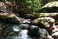 Arroyo en el bosque del Cedro.jpg