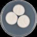 Aspergillus coreanus cya.png