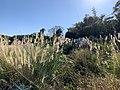At Hsinchu City First Cemetery 06.jpg