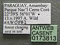 Atta laevigata casent0173813 label 1.jpg