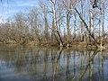 Auglaize east riverbank at Fort Amanda.jpg