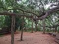 Auroville, Pondicherry - panoramio (7).jpg