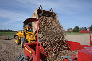 BASF Plant Science - Loading of Amflora potatoes, trial planting in Sweden 2008