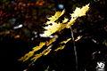 Autumn (5131880374).jpg