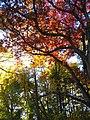 Autumn trees Belmont Plateau Philadelphia.jpg