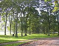 Avenue of trees, Temple Newsam Park, Colton - geograph.org.uk - 259426.jpg