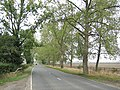 Avenue on the A435 - geograph.org.uk - 61451.jpg