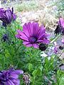 BCBG Flowers 15.jpg