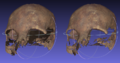 Back face culling skull example.png