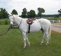 Bailey, a thoroughbred gelding