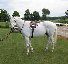 fil pour clôture chevaux