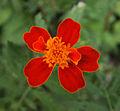 Bakhchisarai - flower2.jpg