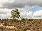 Balloërveld, natuurgebied in Drenthe 08.jpg