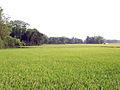 Bangladeshi Village.jpg