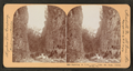 Baptizing in Cedar Creek under the great Natural Bridge, Va, from Robert N. Dennis collection of stereoscopic views.png