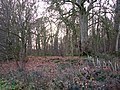 Bare trees in The Grove - geograph.org.uk - 1602965.jpg