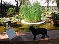 Bassa i gat, jardí Botànic de València.JPG