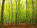 Baumgartner-Heide-11-10-2007-058.jpg