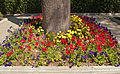 Bedding plants Los Angeles.jpg