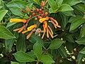 Bee and orange flower 5.jpg