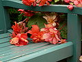 Begonias on bench.jpg