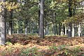 Belle Forêt (232209761).jpeg