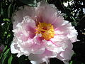 Bellissimo... ElmAgos garden in Udine in Friuli....JPG