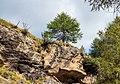 Bergtocht van Peio Paese naar Lago Covel in het Nationaal park Stelvio (Italië). Europese lariks (Larix decidua) op een rotswand 03.jpg