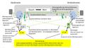 Bild 2 - uhd - Typischer Verlauf eines Wertverhaeltnisses.png