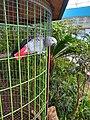 Bird at Geumgang Migratory Bird Observatory, South Korea.jpg