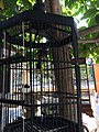 Bird cage in Pasty Market.jpg