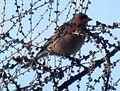 Birds14Slovakia.JPG
