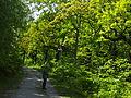 Birken-Eichenwald Blankenburg 1.jpg
