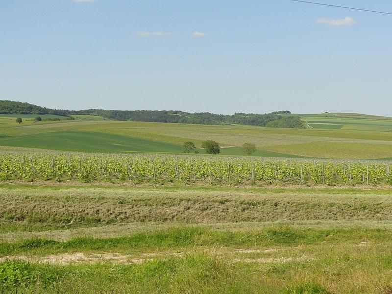 Partie nord du territoire de Bisseuil (51) avec le vignoble et les bois (probablement de la Noue aux Gendarmes).