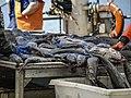 Black Cod Sablefish Sorting wc8.jpg