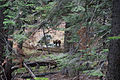 Black bear at Yosemite NP.jpg