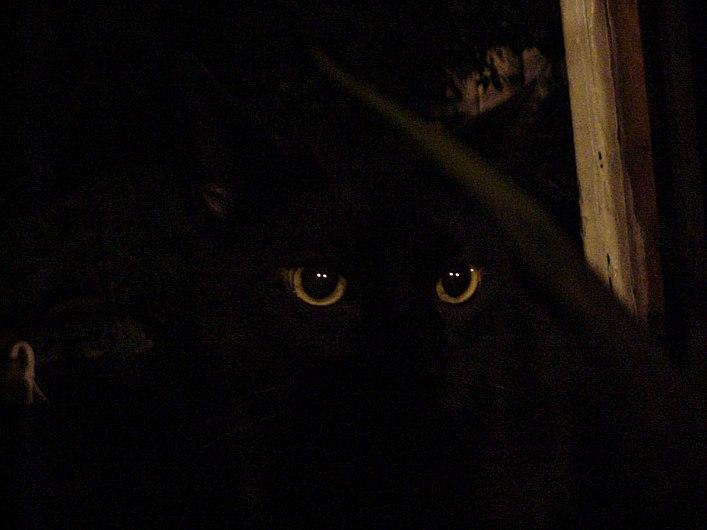 Black cat in the dark.jpg