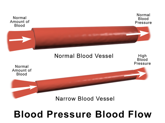 relationship between heart rate and blood pressure during exercise