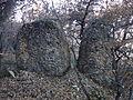 Bloc de poudingue, forêt de Lagremuse.JPG