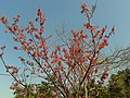 Blossom - panoramio (3).jpg