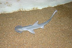 meaning of bonnethead