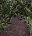Bosque Encantado, Parque nacional de Garajonay, La Gomera, España, 2012-12-14, DD 18.jpg