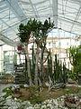 BotanicGardensPisa (99).JPG