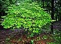Botanic garden limbe80.jpg