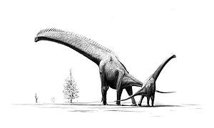 Brachiosaurus is an example of a sauropod dinosaur.