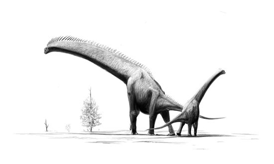 Brachiosaurus-brancai jconway